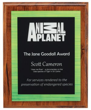 Vivid Acrylic Plaque Green 250mm